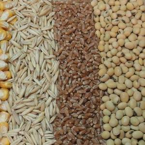 Продается зерно фуражное