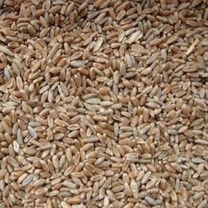 Закупаем зерно фражное (ячмень,  пшеницу)